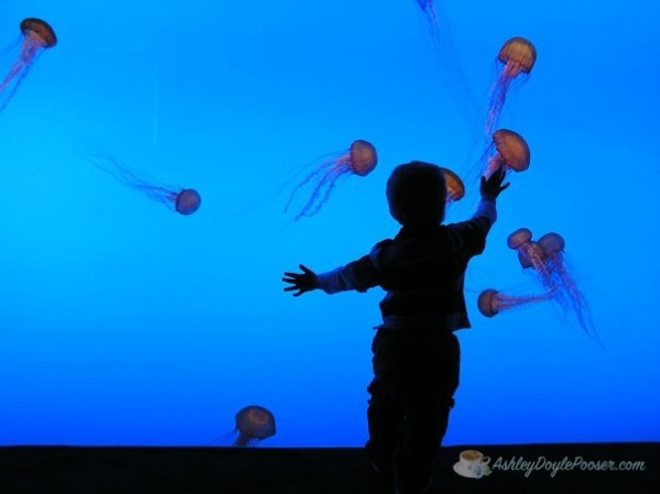 caleb 10 years jellyfish